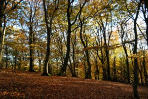 Autumn colours of the Kullaberg nature reserve